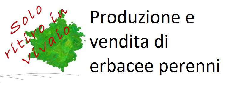 ERBACEE PERENNI - Azienda Agricola di Vincenzo Nardi
